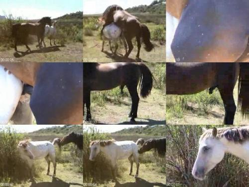 240802388 0901 ztub horse mating - Horse Mating - ZooSex Tube